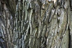 Textured tree bark for a background. Wood, natural, industrial royalty free stock images