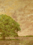 Textured Tree in Field. Antiqued photograph of lone tree in meadow Royalty Free Stock Photography