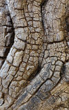 Textured Tree Trunk. Royalty Free Stock Photos