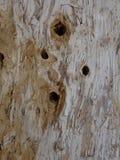 Textured Trunk of Paperbark Tree.. Royalty Free Stock Photos