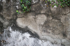 Textured, Weathered Broken Concrete Wall with Vines. Close up of textured, Weathered Broken Concrete Wall with Vines in Asia; various shades of weathering Royalty Free Stock Photo
