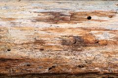 Wood Grain of a Pine Tree royalty free stock photos