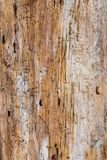Wood Grain of a Pine tree royalty free stock images