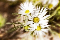 Textured White Daisy Background. With Light & Shadow