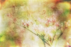 Textured Wildflower Background or Wallpaper with Antique Feel Stock Photography