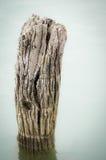 Textured wood Stock Photos