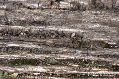 Textured wood bark Royalty Free Stock Images