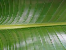 textured zielony drzewko palmowe liść Obraz Stock