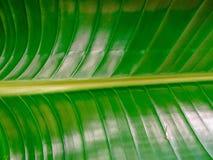 textured zielony drzewko palmowe liść Zdjęcie Royalty Free