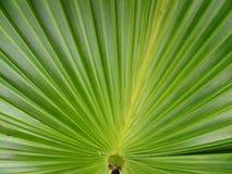 textured zielony drzewko palmowe liść Obrazy Royalty Free