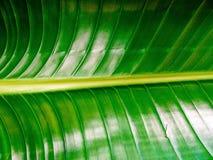textured zielony drzewko palmowe liść Obrazy Stock