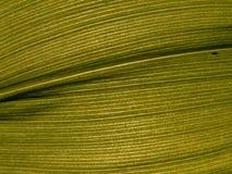 Texturen 13a Royalty-vrije Stock Fotografie