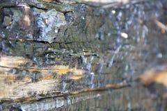 Texturen av bränt trä Svart bränd till kol trädstam Arkivfoto