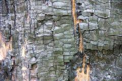 Texturen av bränt trä Svart bränd till kol trädstam Arkivbilder