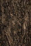 Texturen av det gamla träskället Arkivfoto