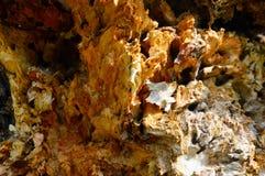 Texturen av en rutten trädstam internt Abstrakt begrepp royaltyfri fotografi