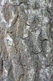 Texturen av en trädstam Arkivbild