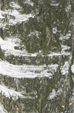 Texturen av en trädstam Fotografering för Bildbyråer