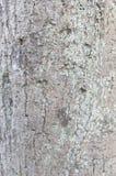 Texturen av en trädstam arkivfoton