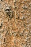 Texturen av ett sörjaskäll, abstrakt bakgrund Royaltyfri Foto