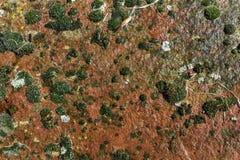 Texturen av mossan på väggen Arkivbild
