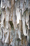 Texturen av trä för bakgrund fotografering för bildbyråer