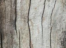 Texturen av trä i snittet Royaltyfria Bilder