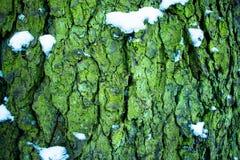 Texturen av trä och skället arkivbild