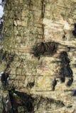 Texturen av trä och skället royaltyfria foton