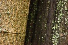 Texturen av trädet som täckas med laven, är makroen royaltyfria foton