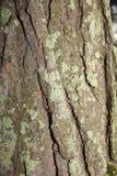 Texturen av trädskället Royaltyfria Bilder