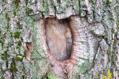 Texturen av trädskället Träd av centrala Ryssland Fotografering för Bildbyråer