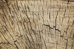 Texturen av trät i snittet Royaltyfria Foton