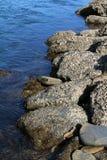 Texturen en vormen in rotsen met Oesters worden behandeld die Stock Afbeeldingen