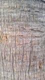 Texturen och detaljen av palmträdet Royaltyfri Bild