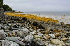 Texturen op de Kust van Maine royalty-vrije stock afbeeldingen