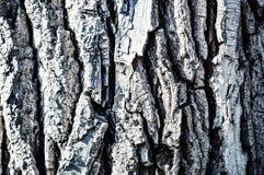 Texturen som målas av trädskäll Royaltyfri Bild