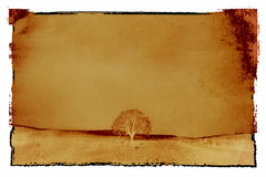 texturend vintage tree photo Royalty Free Stock Images