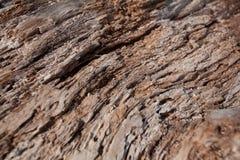 Texturer av den torra trädstammen/trä Royaltyfri Bild