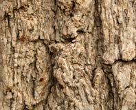 8 texturer royaltyfria foton