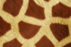 Texturer för pälsdjur, stora Girafe Arkivfoton