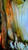 Texturer för trä för trädstam Royaltyfria Foton
