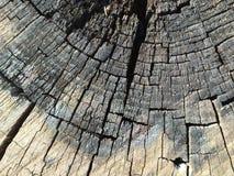 Texturer för trädstam arkivbild