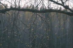 Texturer för trädstam i den naturliga miljön - tappningfilmblick Royaltyfri Foto