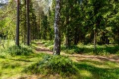 texturer för trädstam i naturlig miljö Arkivbilder