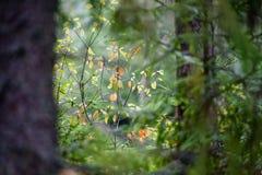 texturer för trädstam i naturlig miljö Royaltyfri Bild