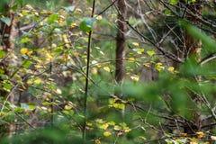 texturer för trädstam i naturlig miljö Royaltyfri Fotografi