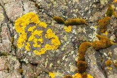 Texturer och modeller bildade vid laven och svampen på stenar arkivbild