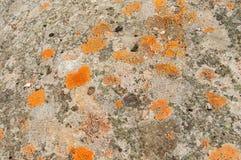 Texturer och modeller bildade vid laven och svampen på stenar royaltyfria foton