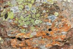 Texturer och modeller bildade vid laven och svampen på stenar royaltyfri bild